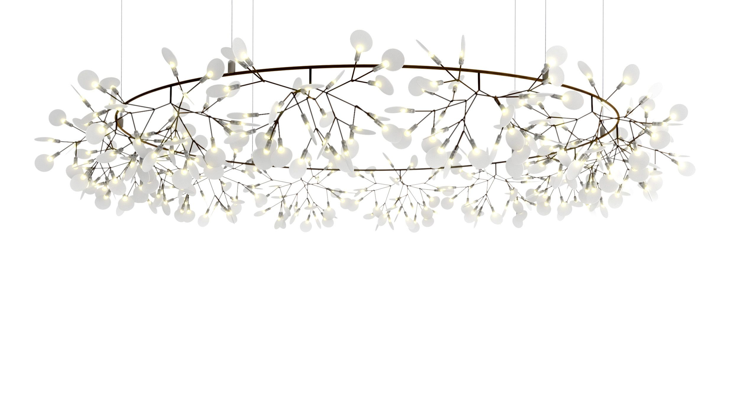 Product Image Heracleum The Big O